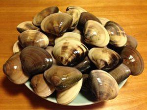 ~春の海の味、千葉県産「蛤」入荷です~