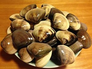 千葉産の旨みたっぷりの蛤が届いてます。